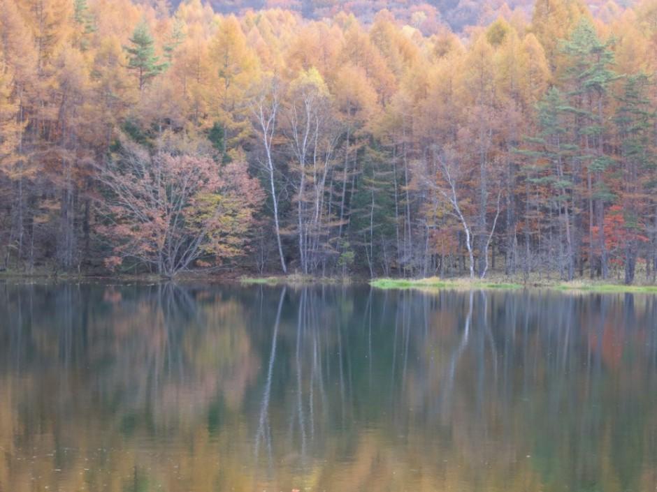 画像:御射鹿池(みしゃかいけ)の紅葉 平成26年10月26日
